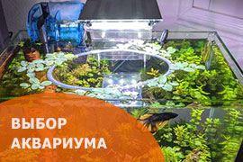 Выбор аквариума для петушка
