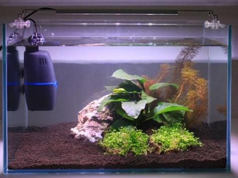 Краткая инструкция по быстрому запуску аквариума для новичков