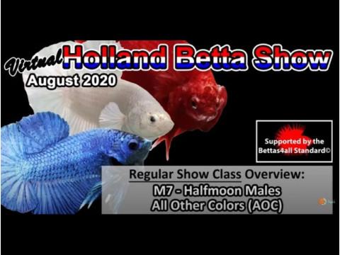 Петушки от Акварыбки Ферма - призеры Holland Betta Show 2020