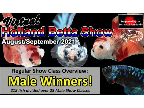 Ищете рыбку петушка шоу класса ? Петушки Акварыбки Ферма – призеры Holland Betta Show 2021.